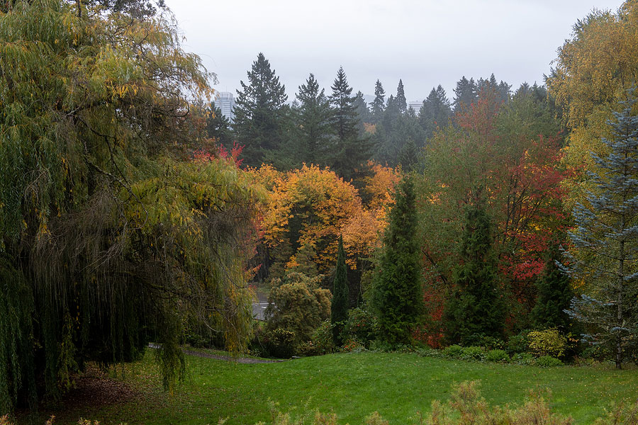 Fall foliage at Washington Park, Portland